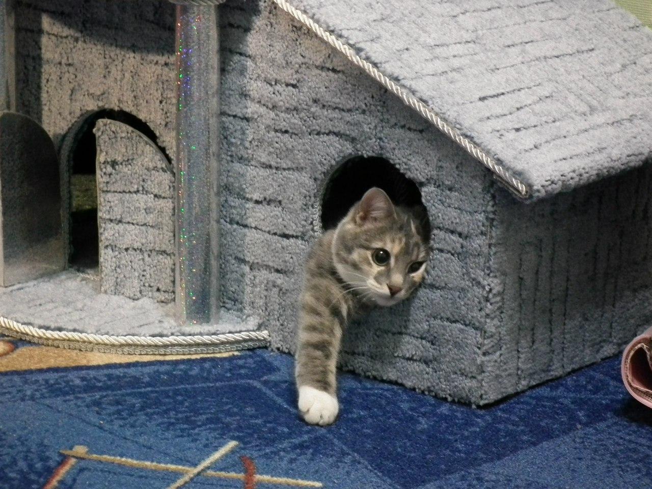 дом на улице для кота картинка пожалуй, самовыразиться относительно