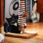 черно белый кот с когтеточкой