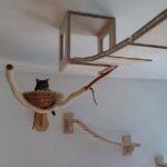 настенные полки для кошек идеи варианты