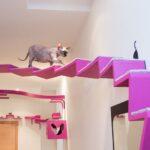 настенные полки для кошек фото видов