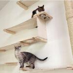 настенные полки для кошек дизайн