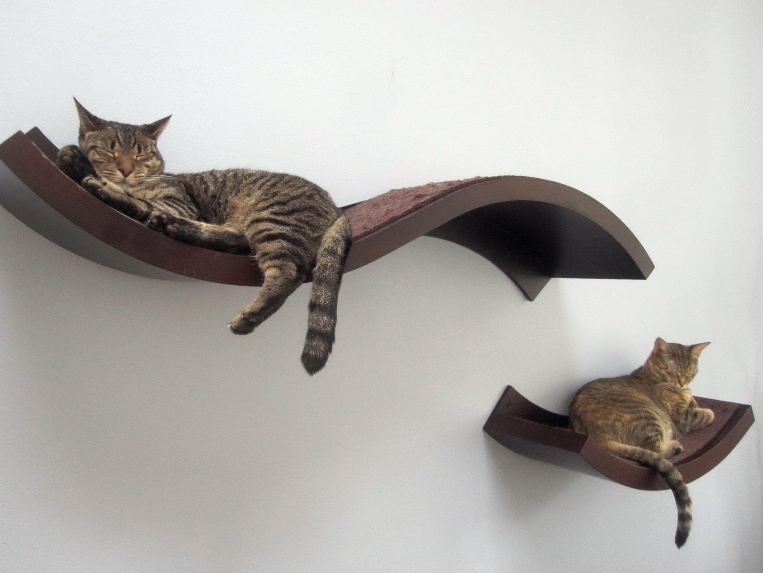 настенные полки для кошек фото дизайна