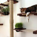 настенные полки для кошек фото идеи