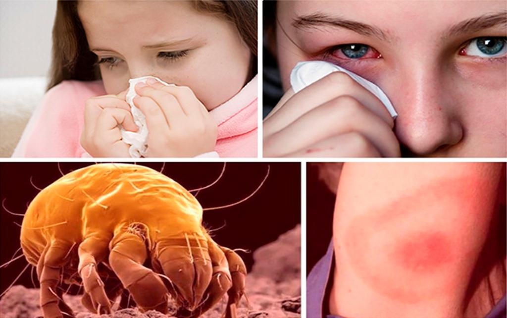 постельный пылевой клещ