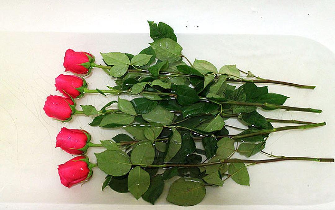розы в ванне