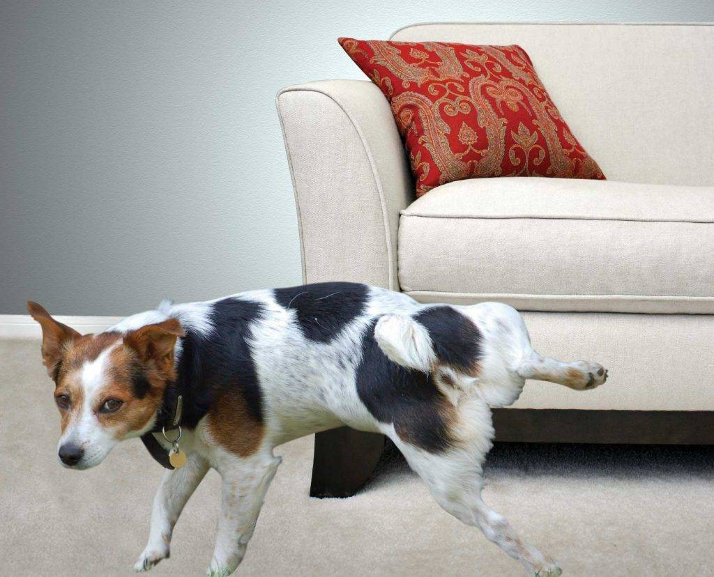 неприятный запах на диване