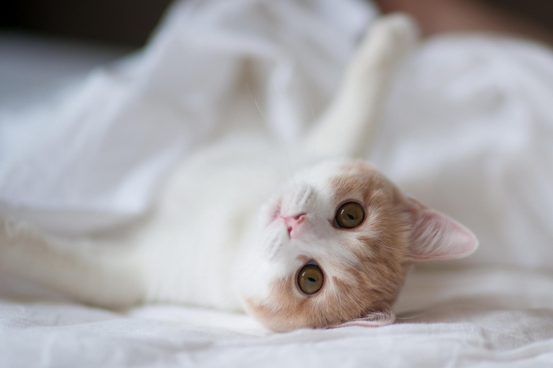 животные на постели
