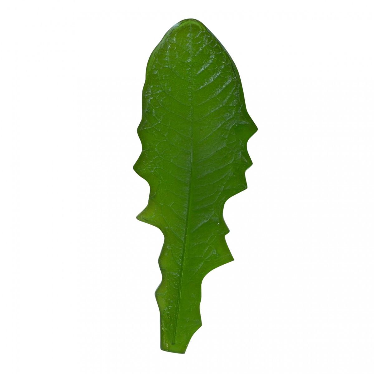 лист одуванчика