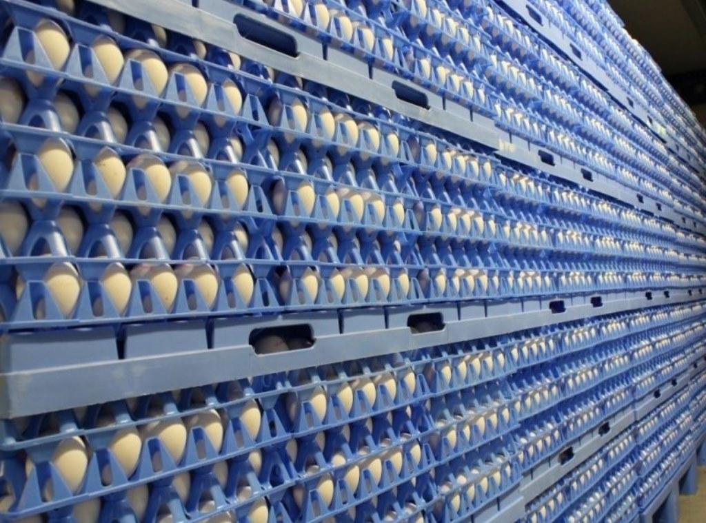 яйца на складе