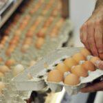 яйца в магазине идеи
