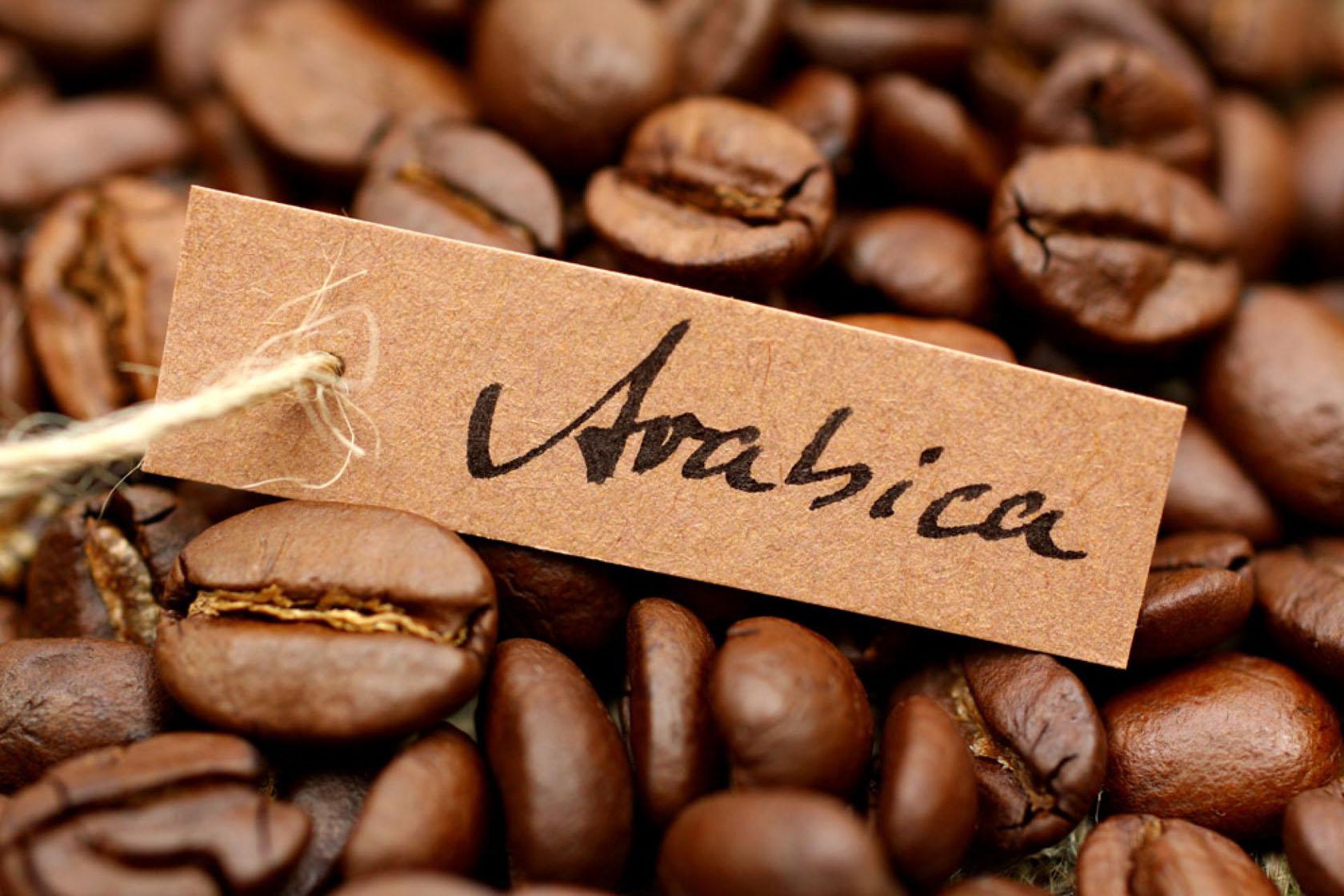 сорт кофе арабика